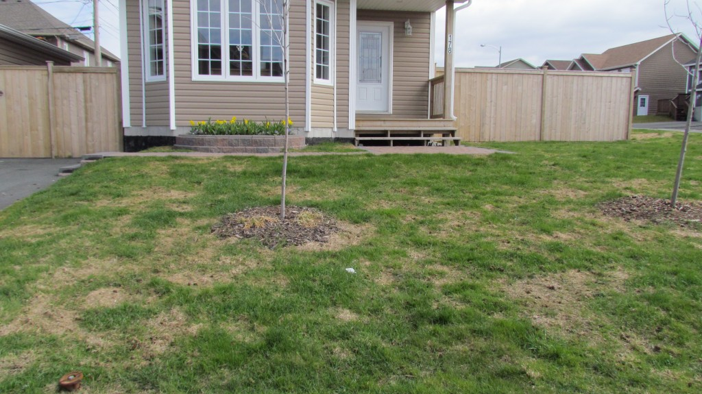 Winter Lawn Care: Snow Mold Disease - Featured Image