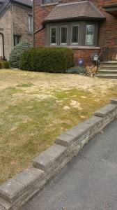Spring Snow Mold Damage