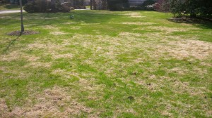 Sections of Creeping Bentrgass slow to green up in early Spring