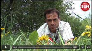 dandelions-blossoming-into-a-big-headache-for-ottawa