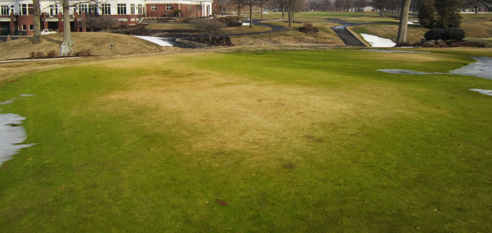 The extent of the desiccation damage can range from minor to severe.