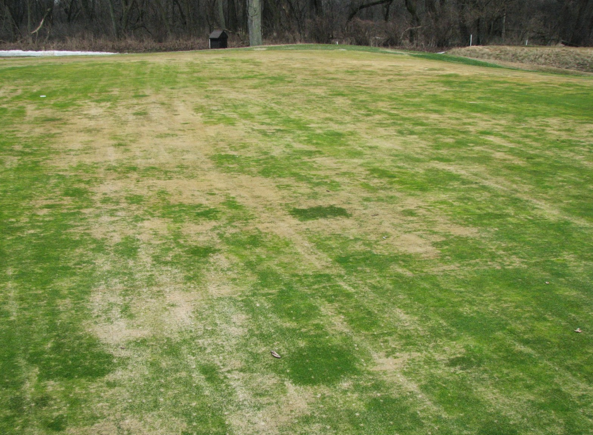 Crown hydration can be quite damaging for your lawn.