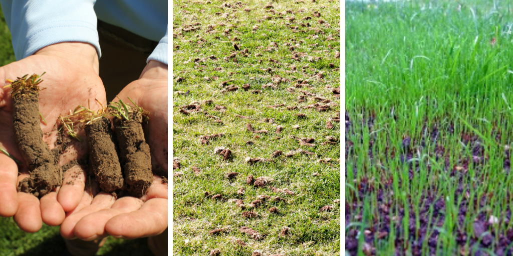 Core aeration is the process by which small cores of soil are removed from the lawn.