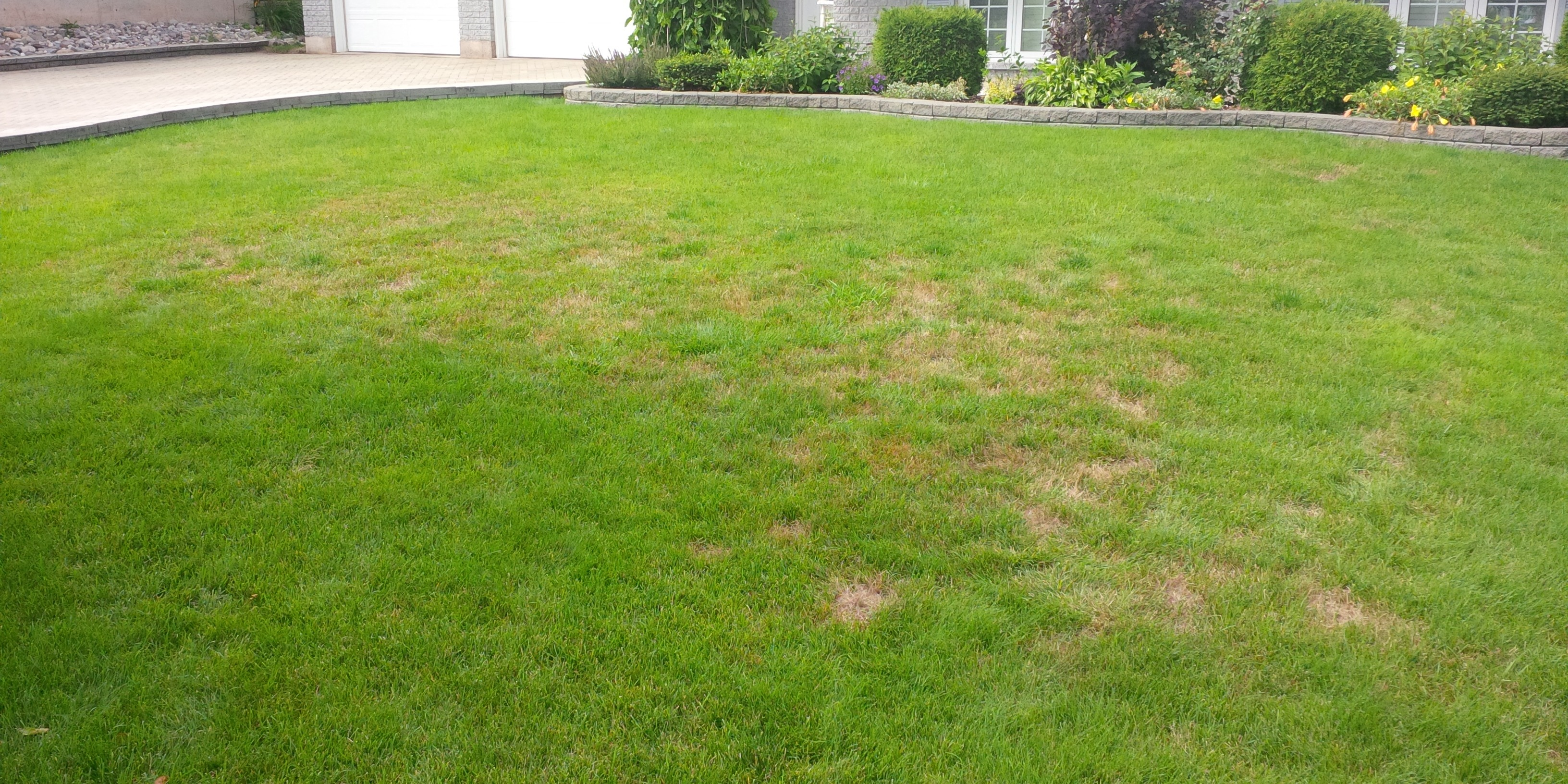 Chinch bug damage occurs in late July and August.