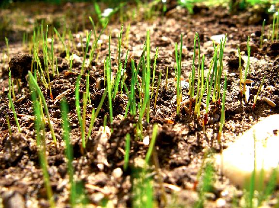 Grow_Grass-1