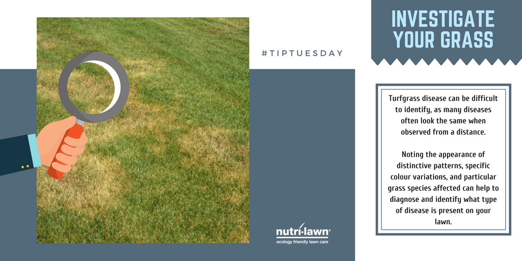 Turfgrass disease can be difficult to identify, as many diseases can look much alike from a distance.