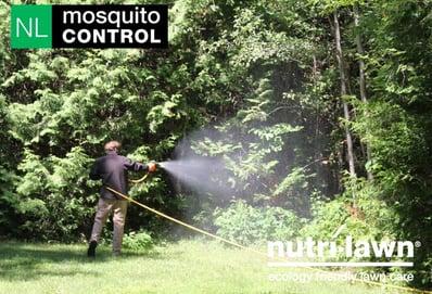 Mosquito_Con_1-1