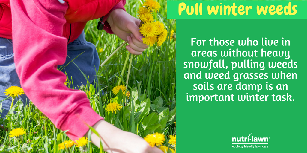 The presence of weeds or moss in your lawn is a sign of the health of that environment