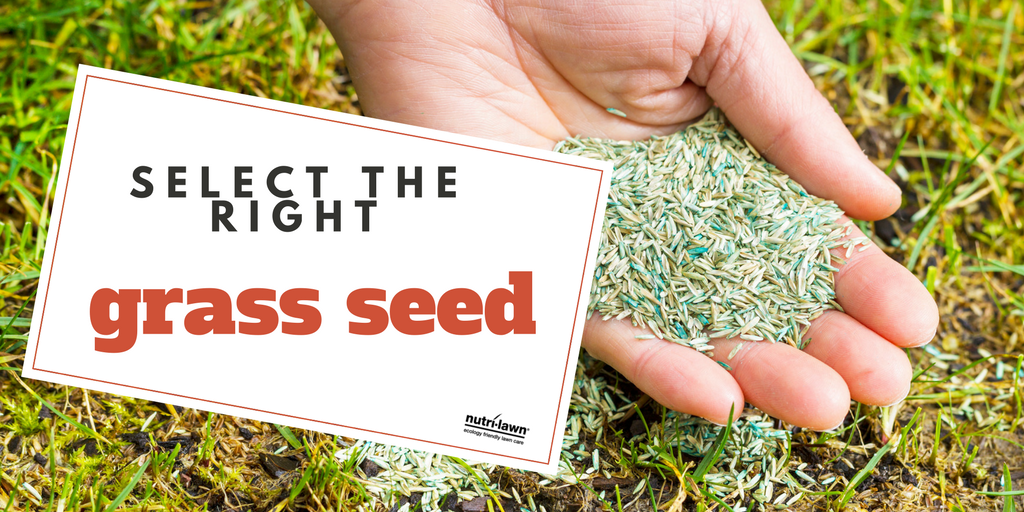 Selecting the right grass seed is very important.