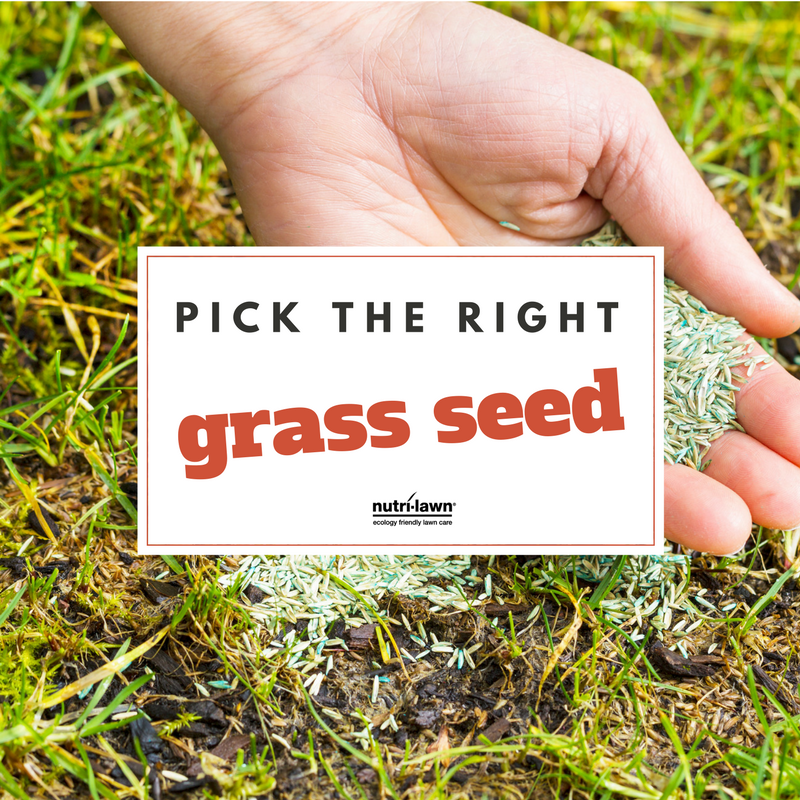 Spring is highly regarded as one of the best times to plant grass seed.