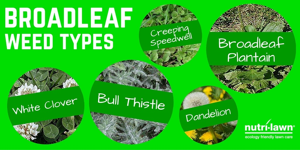 Weeds can be grouped many different ways, but one of the simplest is by whether they are easy or hard to control.