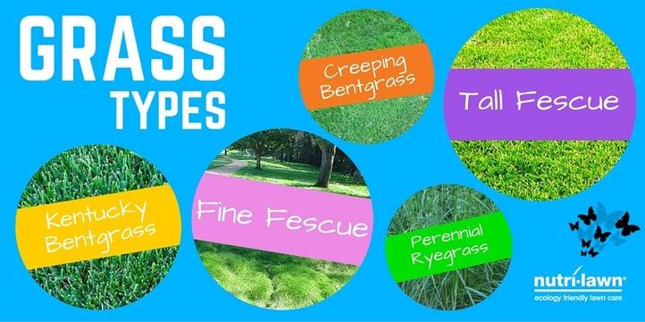 Grass_Types_twitter.jpg