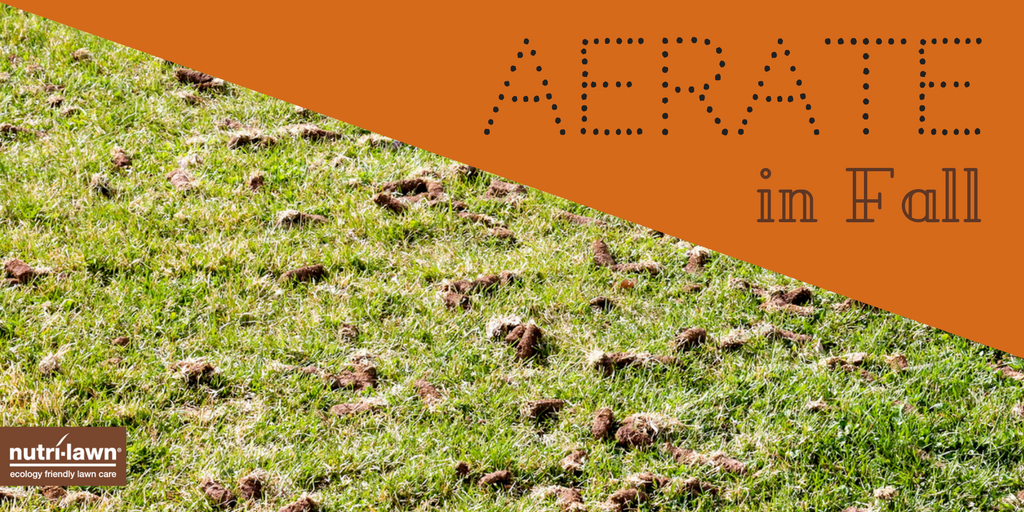 When your lawn is aerated, a machine mechanically removes small cores of soil and thatch from the lawn, which are left on the surface to be reincorporated.