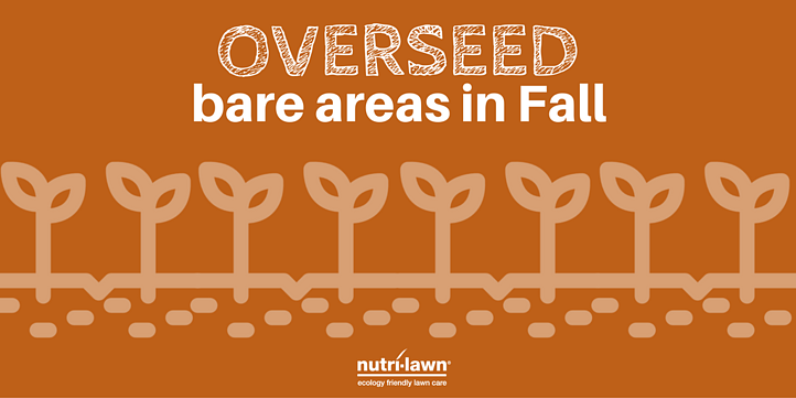 Overseeding assists by filling in and thickening up thin, weak, or damaged areas in a lawn.