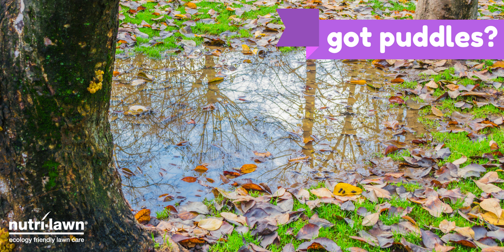 Prolonged standing water can result in waterlogged soils, so next time there's heavy rain, keep an eye on how your lawn reacts.