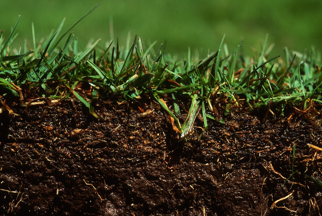 Over time, soil can become more and more compacted from too much foot traffic and vehicle traffic.