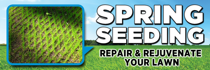 Your grass seed must have good seed to soil contact.