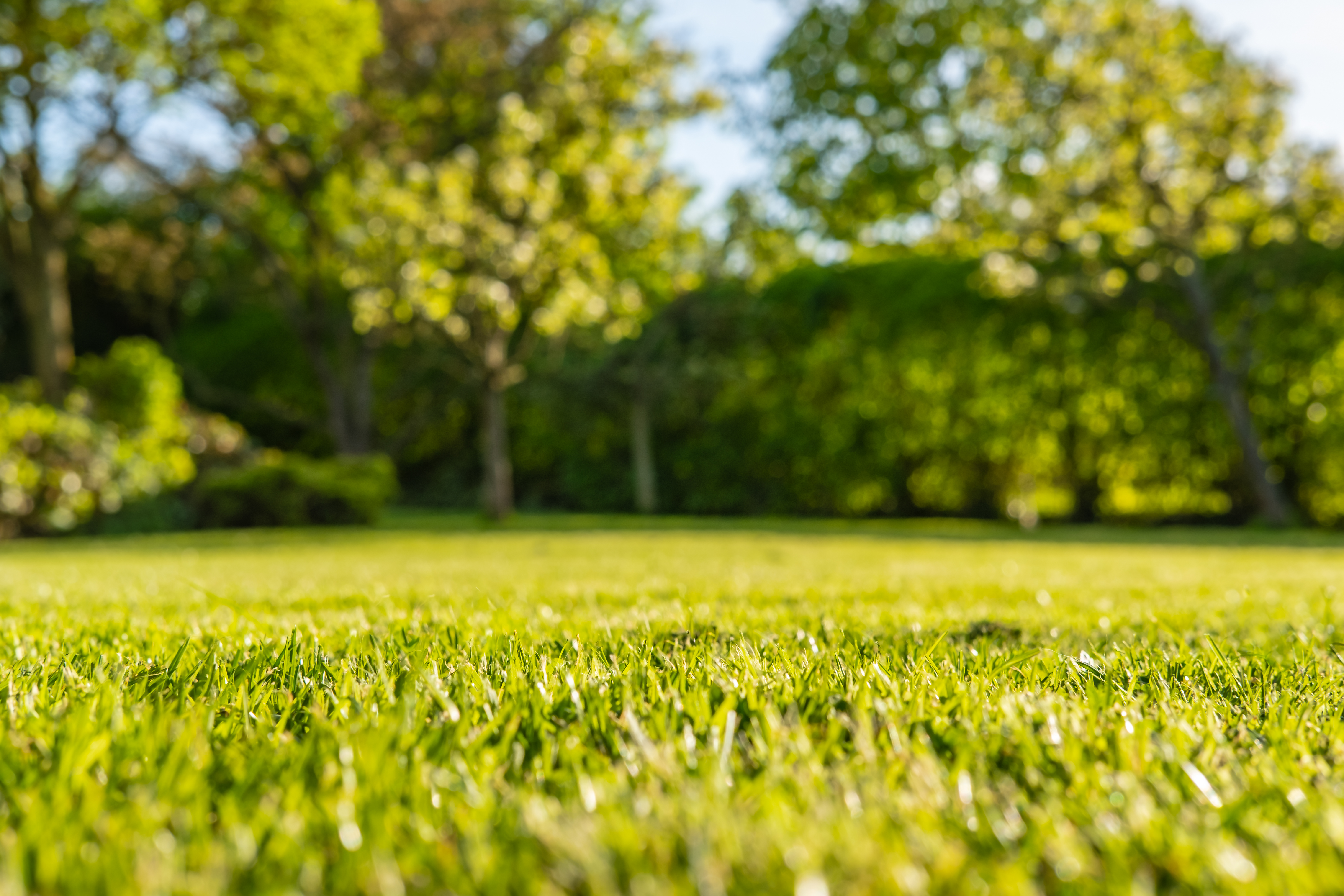 Soil plays a very important part in determining how well a lawn can perform.