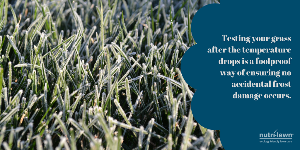 Test your grass to make sure it is safe to walk on.