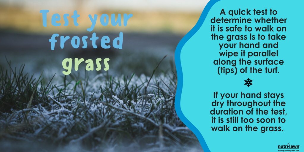 A frost covered lawn should always be stayed off of until the frost has lifted.