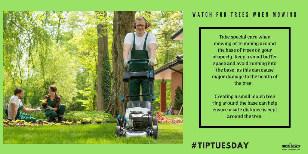 Take special care and avoid running into the base of trees when mowing or trimming around them.