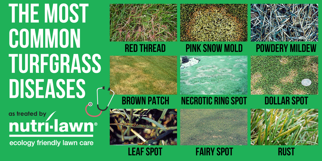 Examining individual grass blades up close can reveal lesions, spots, changes in colour, and stunting that can narrow the search.