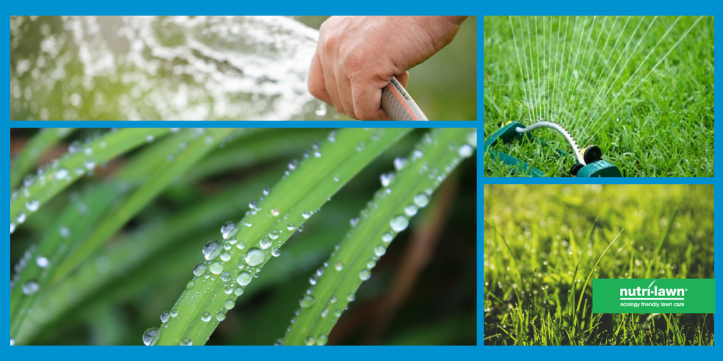 A newly seeded lawn needs to be watered daily in order to ensure good establishment.