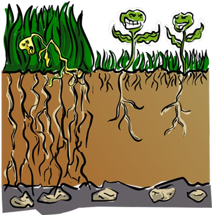 All plants have roots that act like nutrient and water delivery systems.