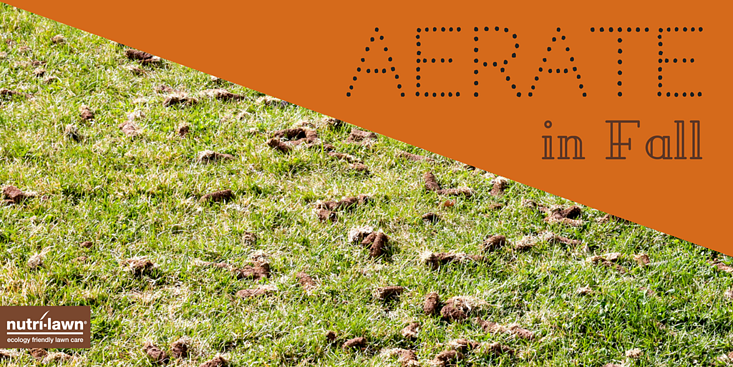 Aeration helps loosen compacted soil.