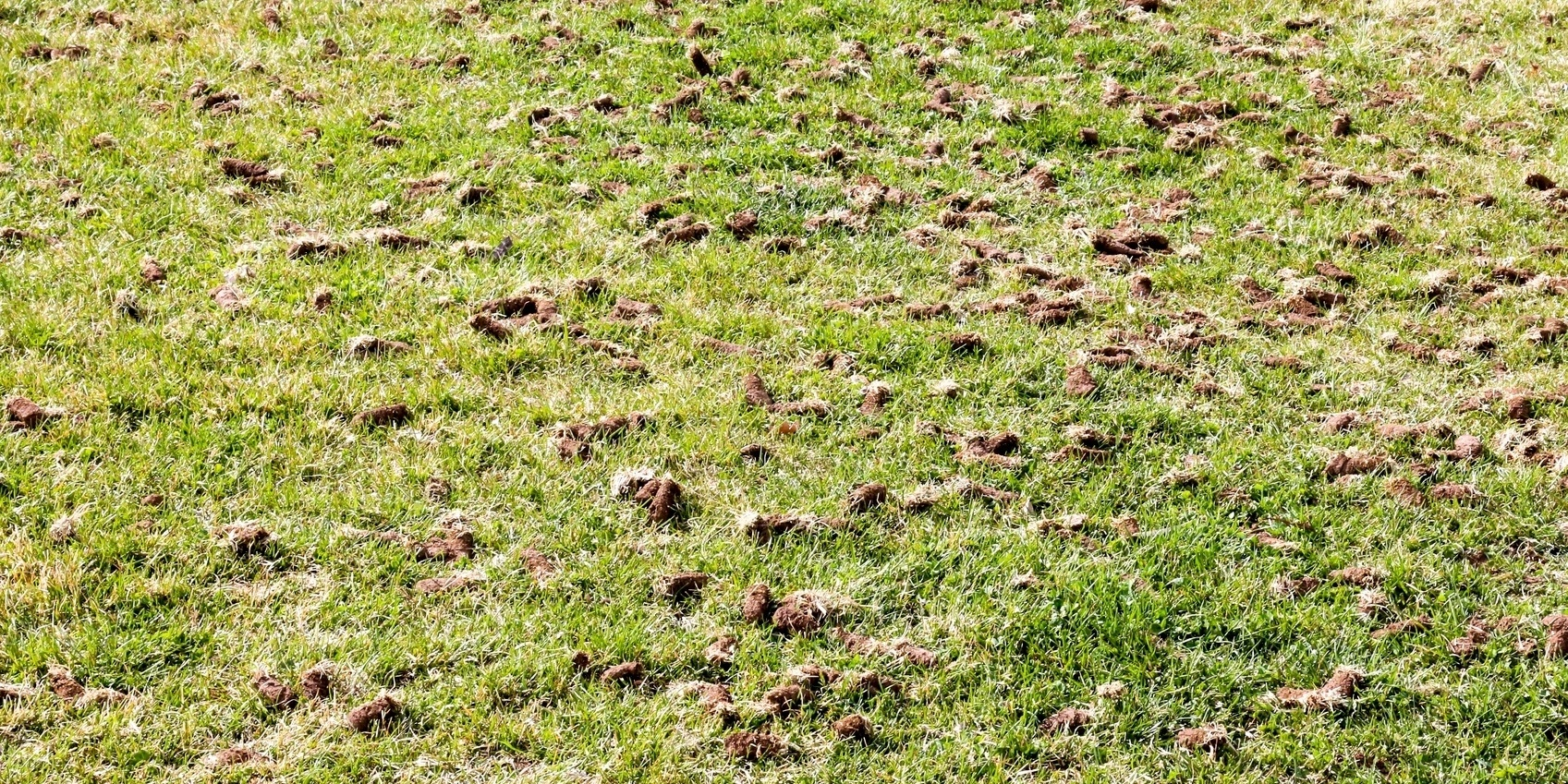 When an aeration is performed, small cores of soil (and thatch) are removed from the lawn with an aeration machine.