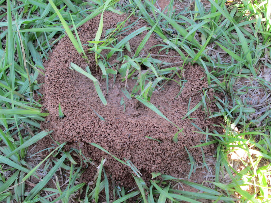 ant-hill