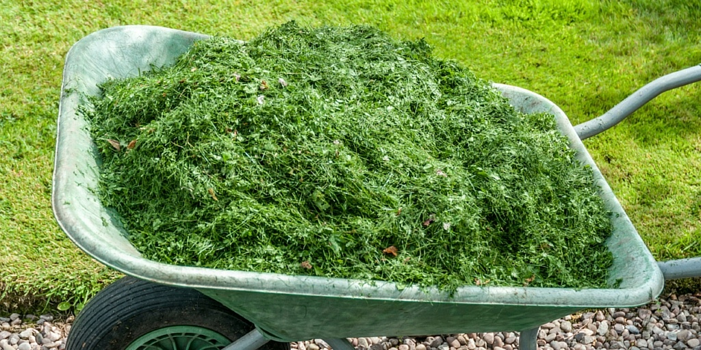 Leave grass clippings after mowing.