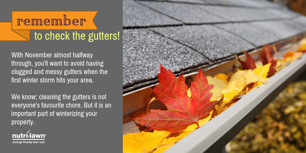 check-the-gutters-t-1