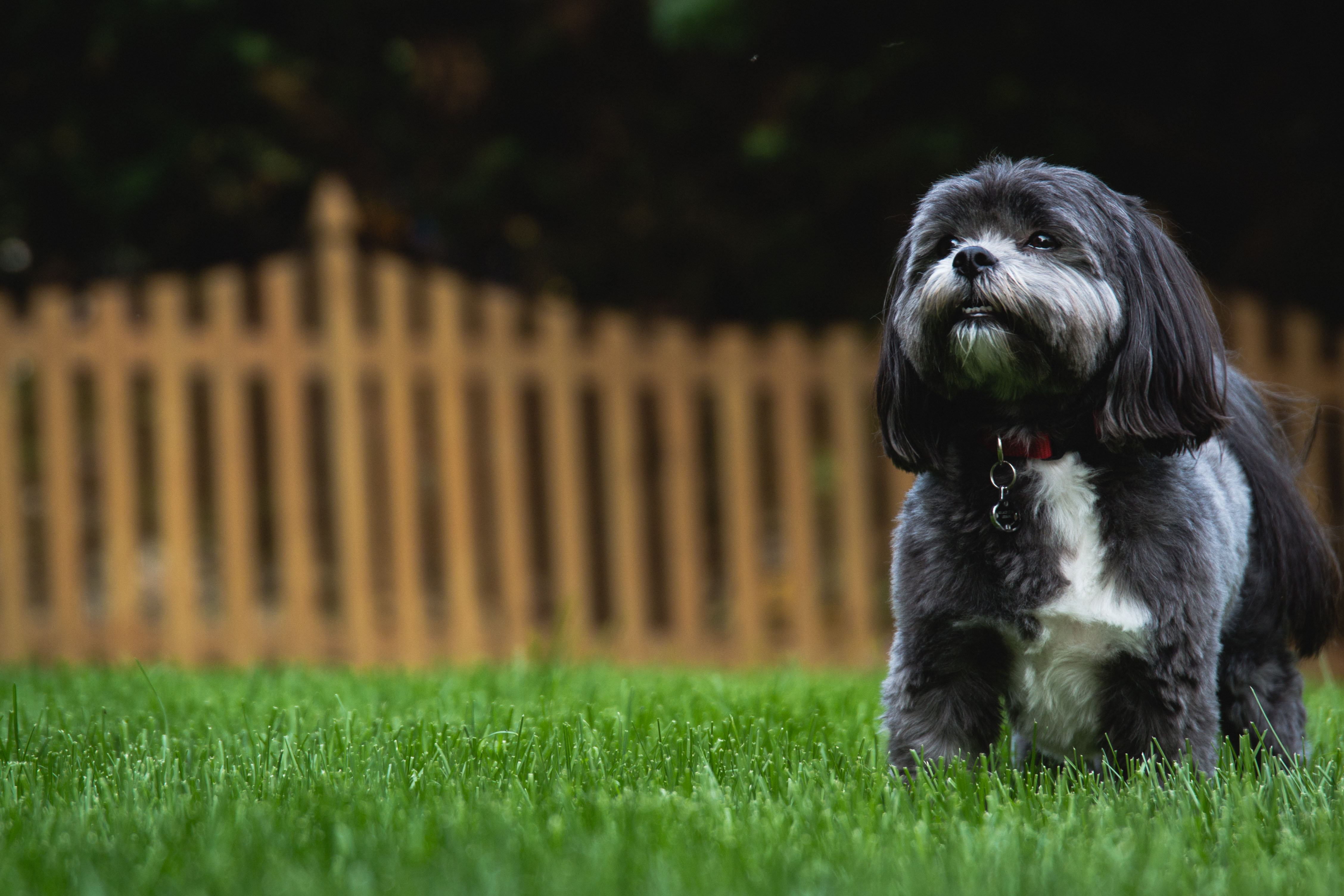Nutri-Lawn Vancouver are the experts in lawn care in the Lower Mainland.