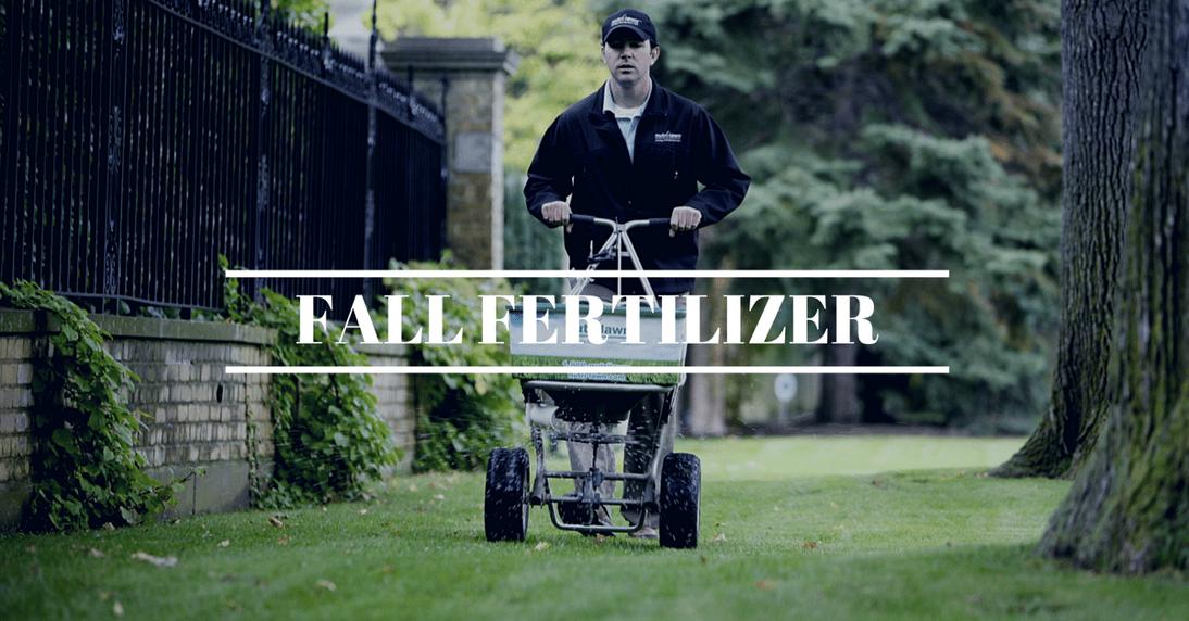 Fertilize in fall.