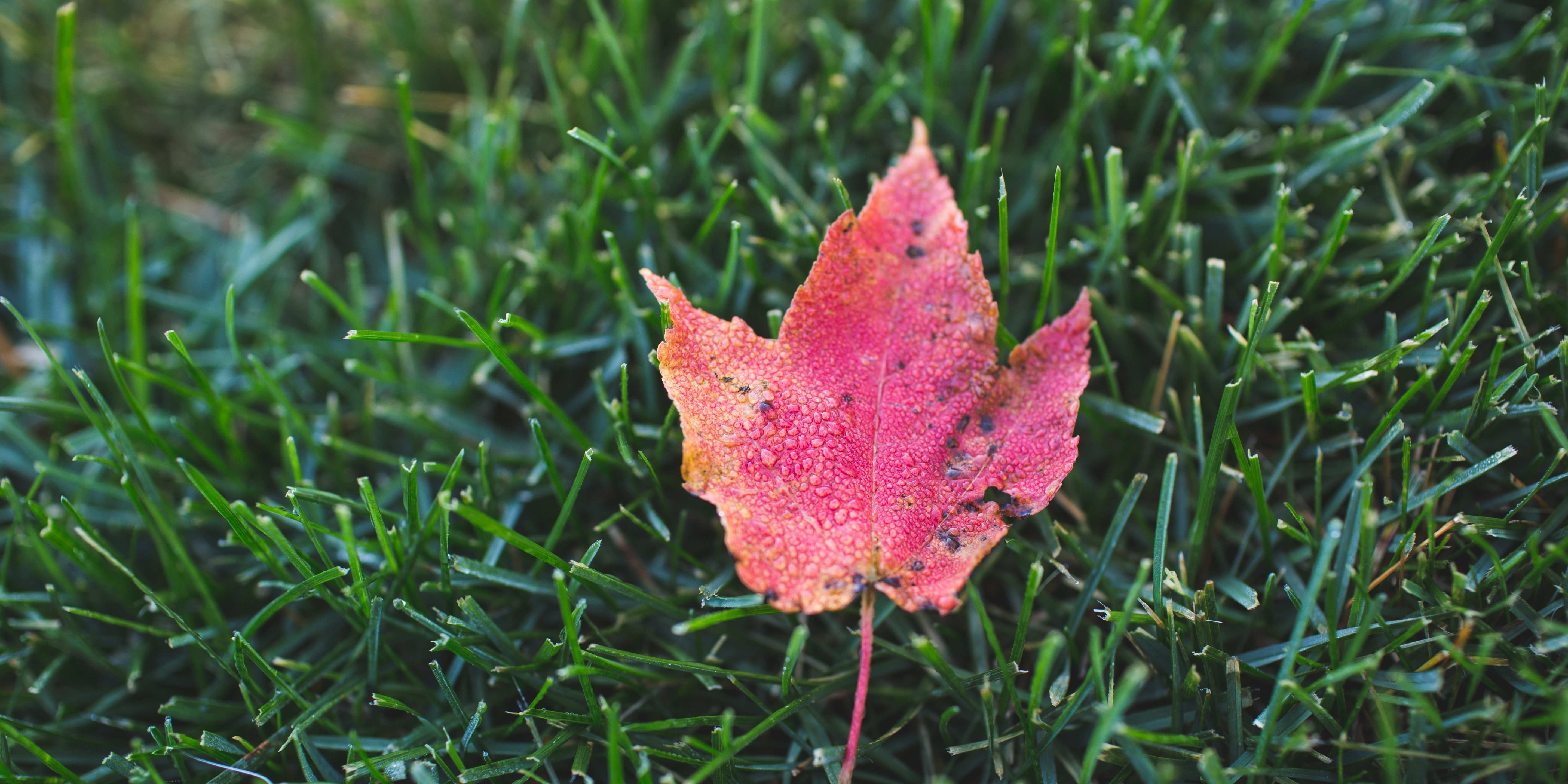 Why you need to rake your leaves in Fall