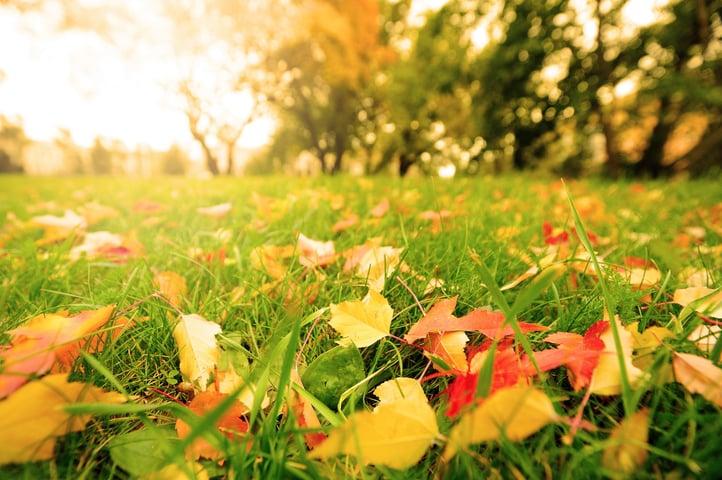 fall-seeding-options.jpg