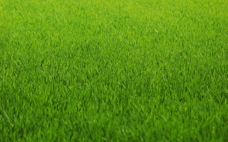 Your Gr May Be Greener In Fact It The Greenest Lawn On Block But Is Truly Green Meaning Are Maintenance Practices