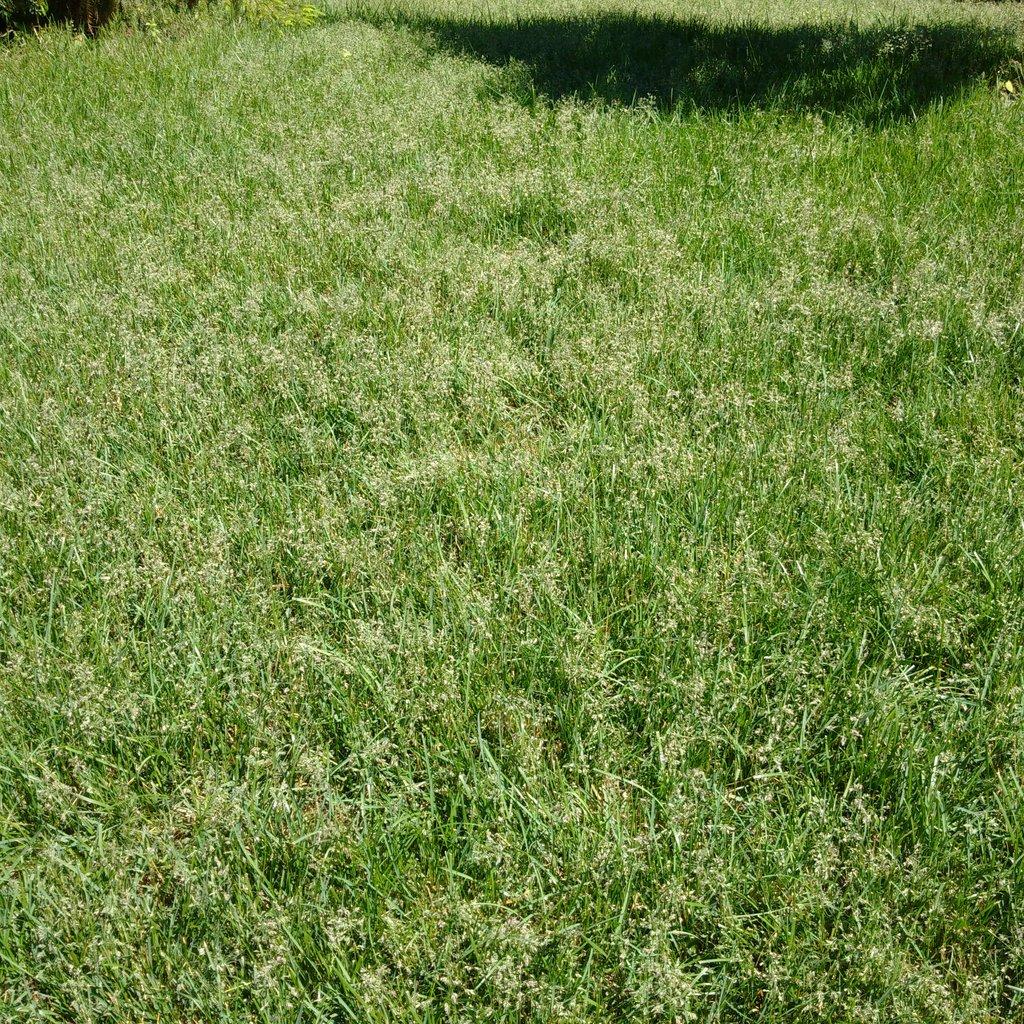 grassgoingtoseed