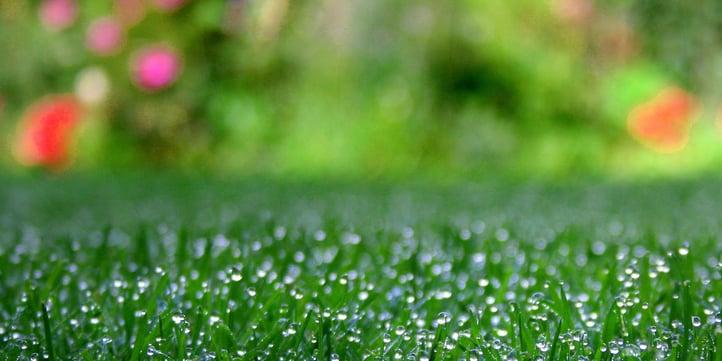 green-grass-spring-fertilizer.jpg