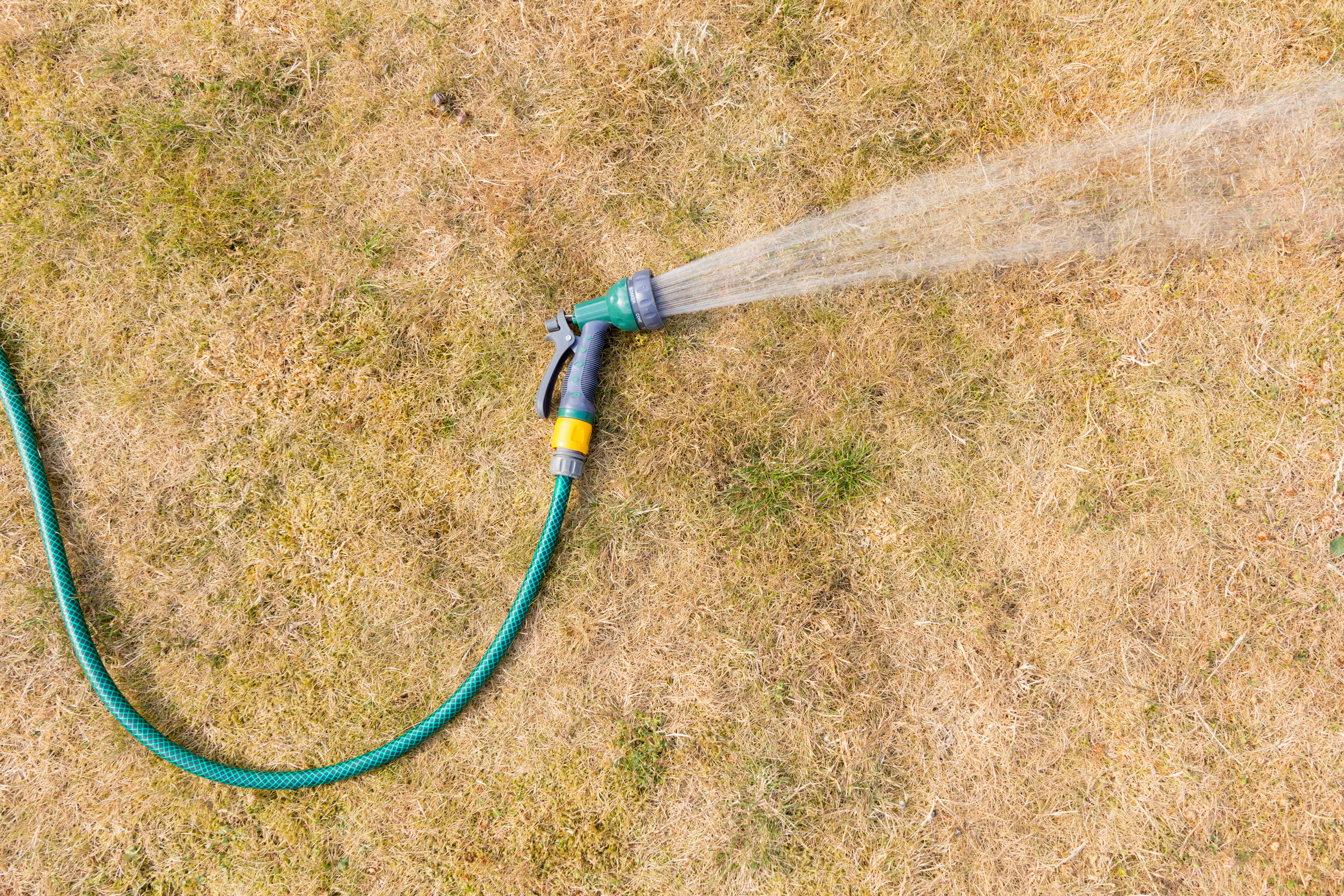Don't panic if your lawn is dormant or suffering from summer stress.