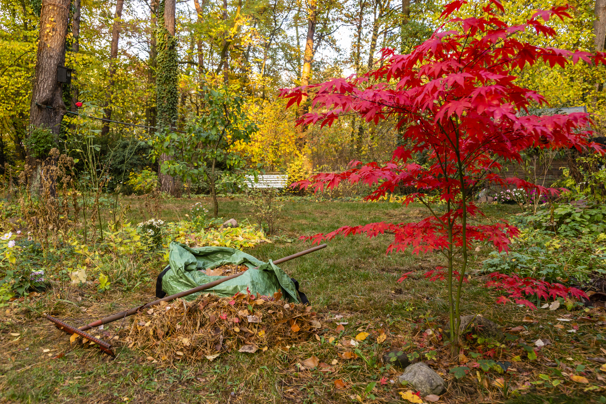 Be wary of fall lawn diseases and pests.