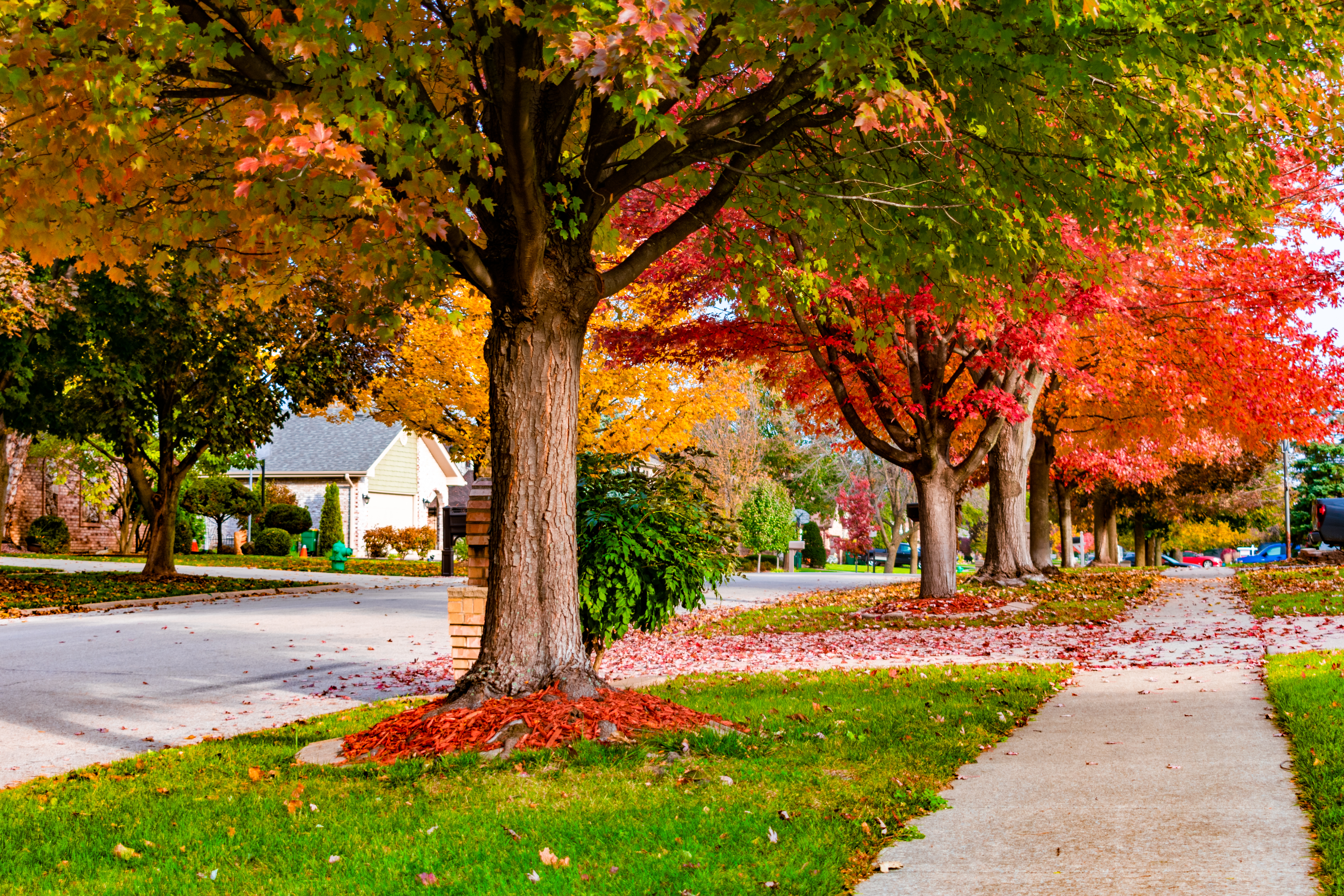 Your lawn needs care in the fall.
