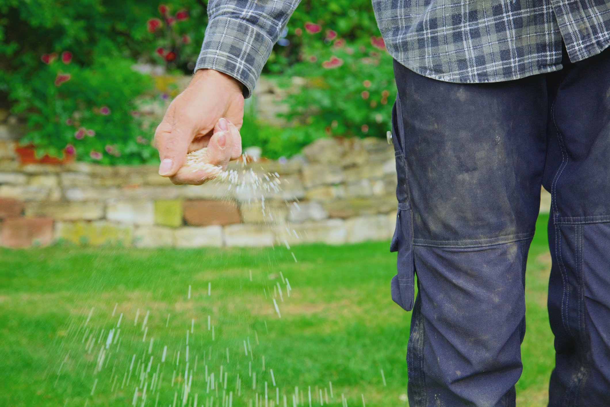 Weak area of your lawn should be treated in spring.