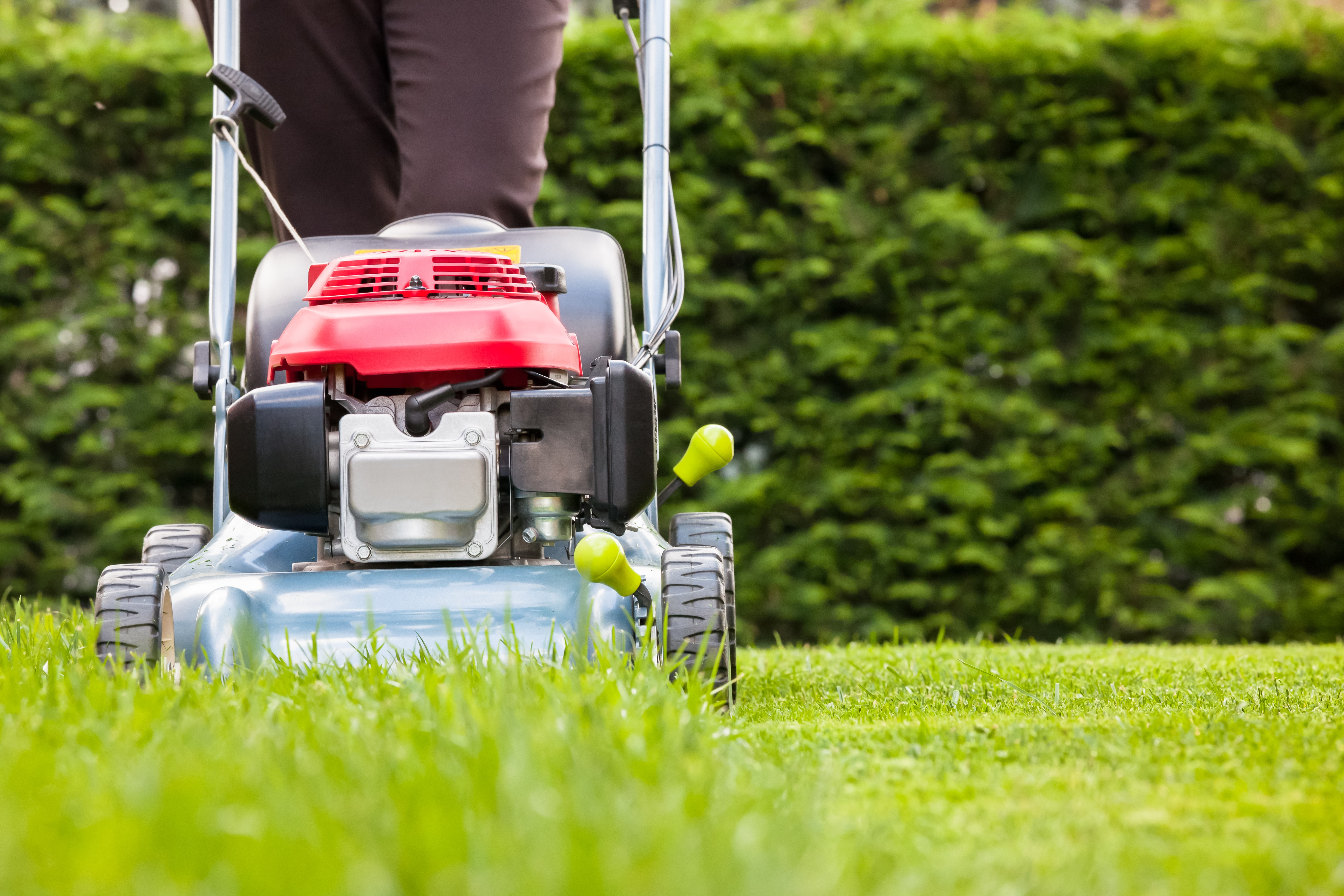 The final mow before winter should be adjusted so that the lawn is cut shorter than usual.