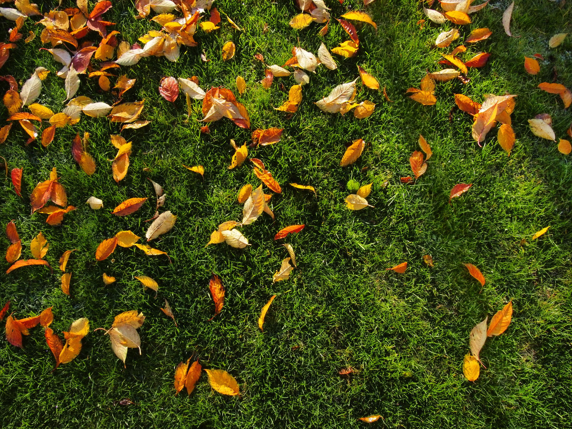 Prepare your lawn for winter this fall.