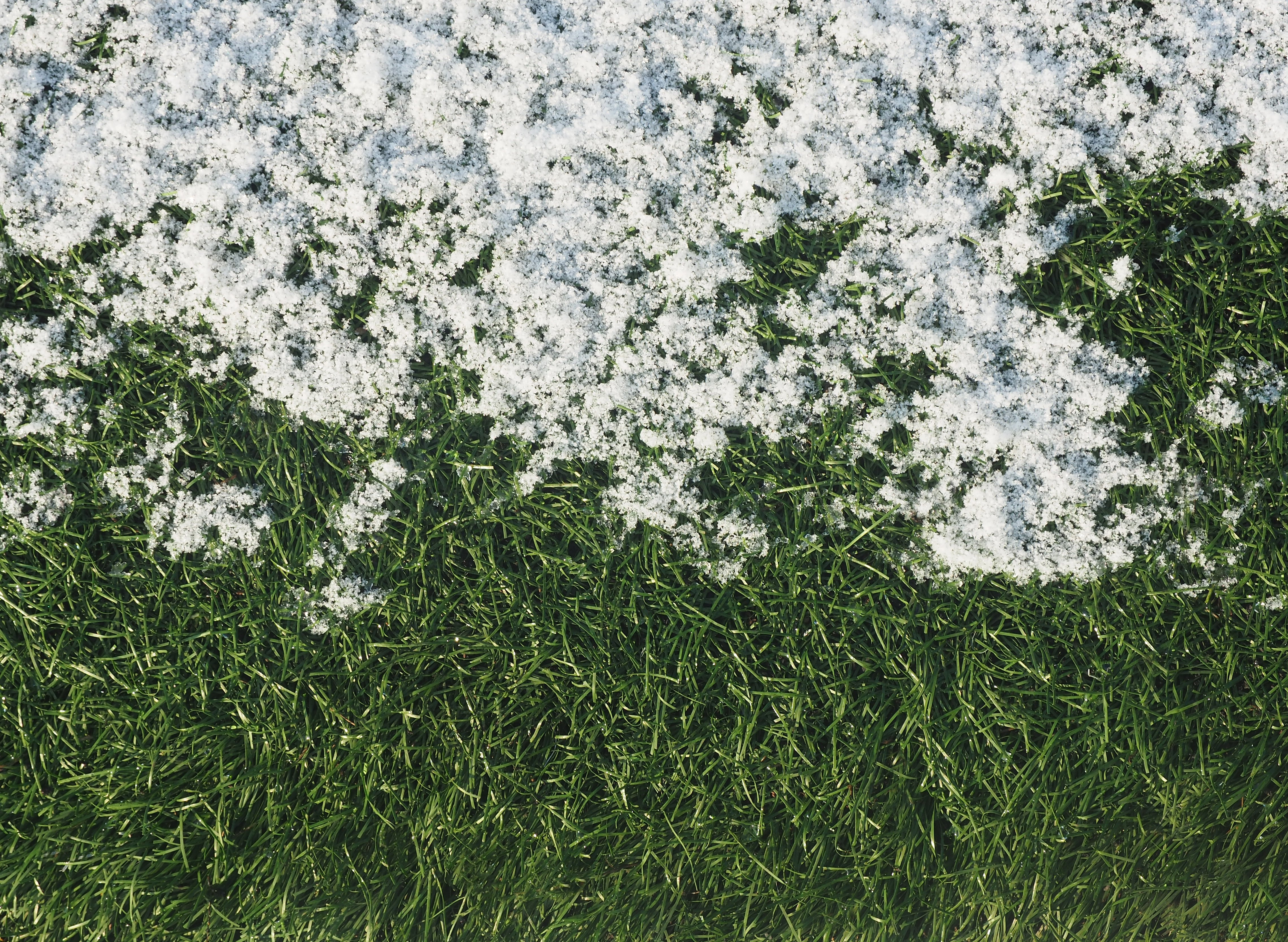 The optimal timing for fall fertilizer would be when the shoot growth of the turf stops and before the ground freezes.