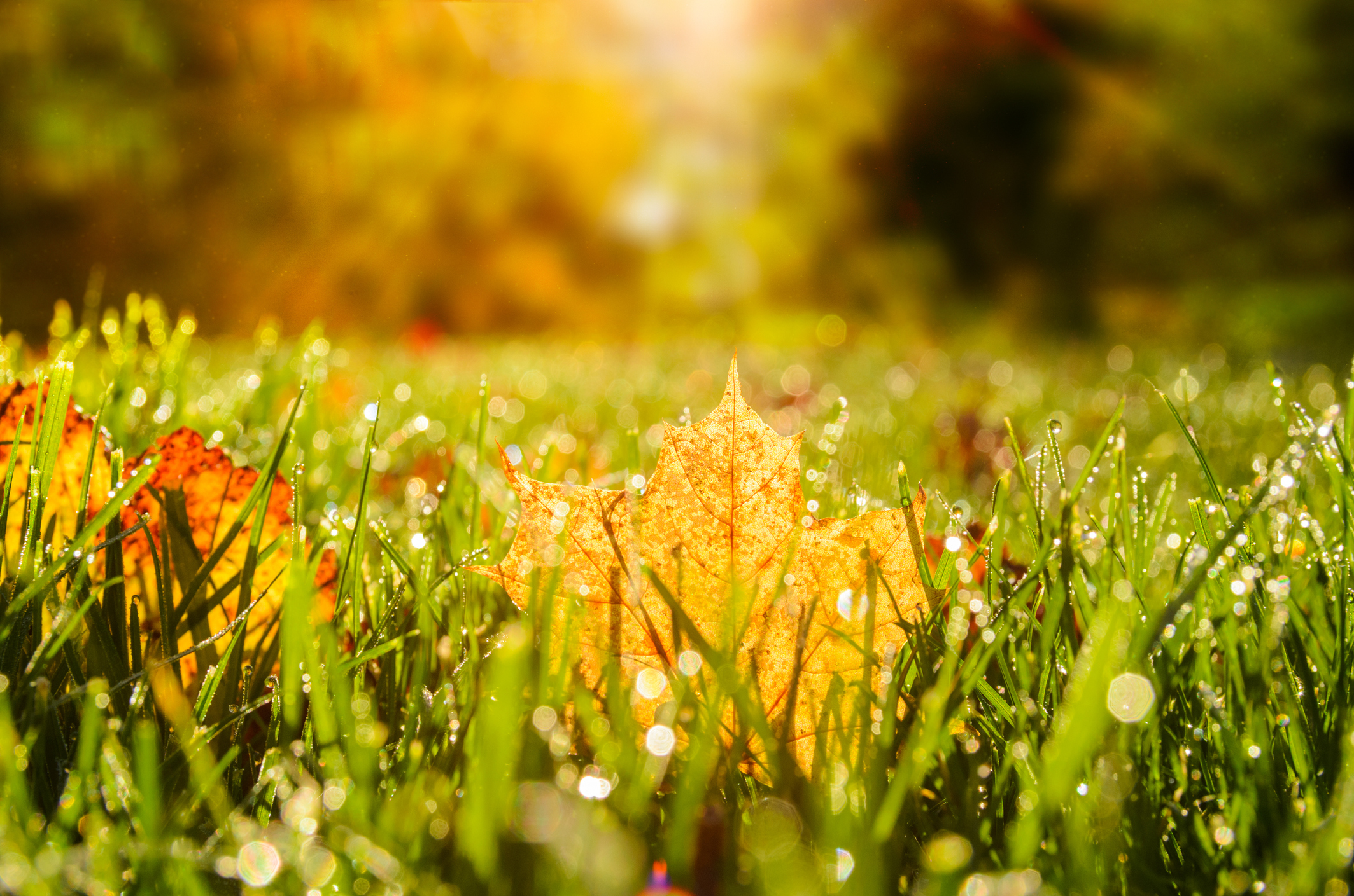 Fall is a great time to prepare your lawn for spring.