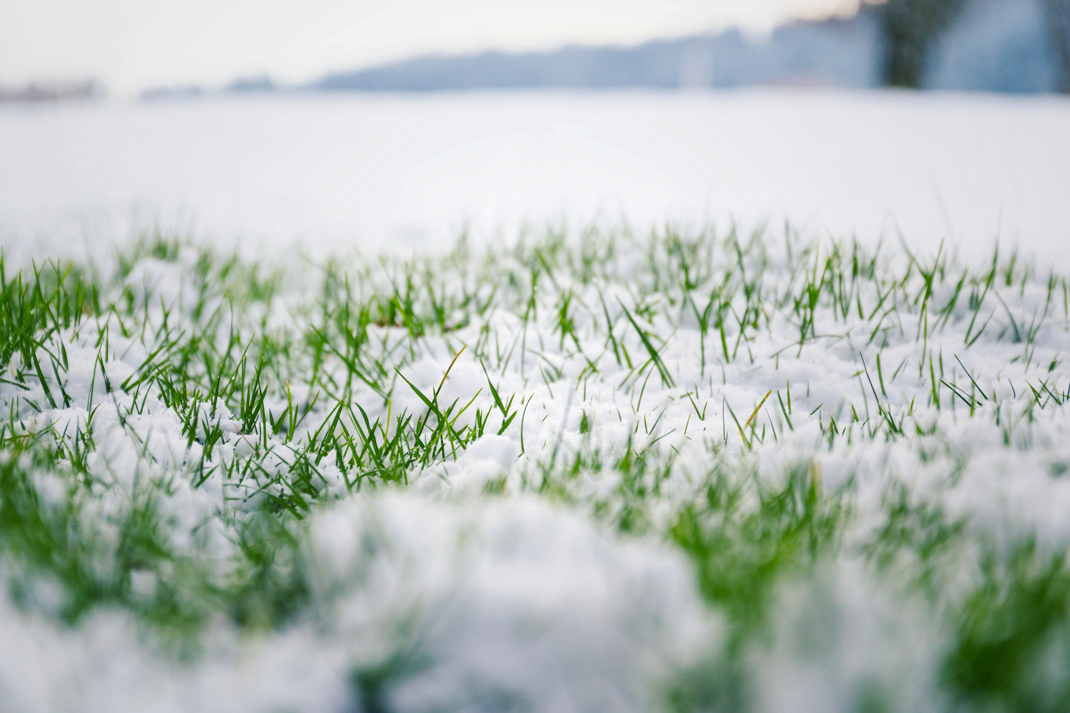 Winter elements can cause damage to your lawn.