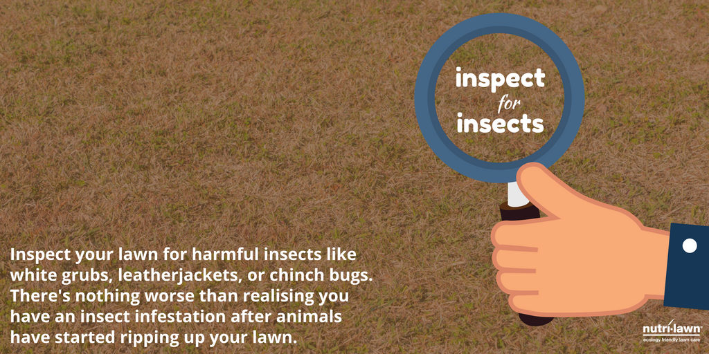 inspectforinsects-t.png